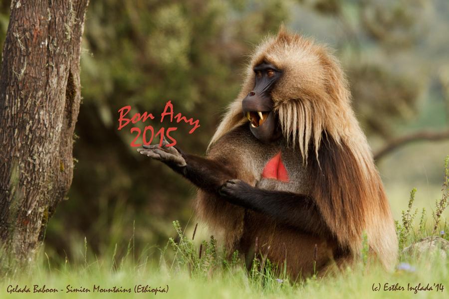Bon-Any-2015