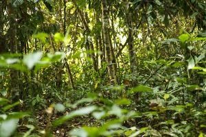 Selva / Selva / Rain Forest