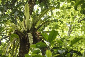 Detall vegetació / Detalle vegetación / Vegetation detail