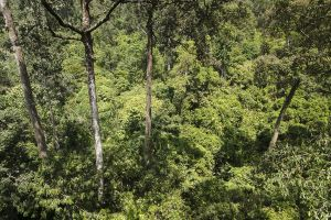 Selva / Selva / Rainforest Canopy
