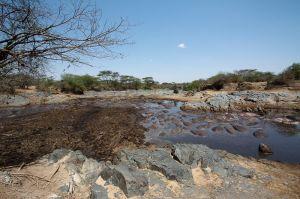 Hippo Pool (Hippopotamus amphibius)