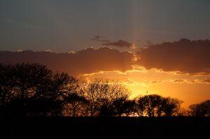 Posta de sol al Serengeti / Puesta de sol en Serengeti / Sunset at Serengeti