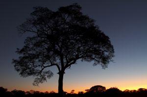 Capvespre al Pantanal Nord / Anochecer en el Pantanal Norte / Sunset at Pantanal North