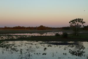 Vespre al Pantanal Sud / Anochecer en el Pantanal sur / Sunset at Pantanal South