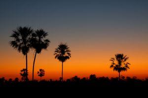 Posta de Sol al Pantanal Sud / Atardecer en el Pantanal sur / Sunset at Pantanal South