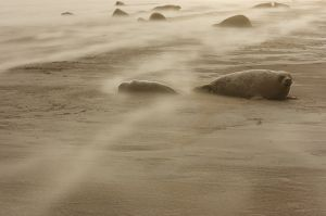 Tormenta de sorra / Tormenta de arena / Sand storm